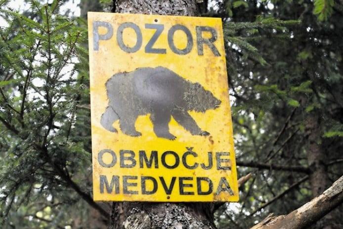 SZÁZÁVAL LÖVIK KI A MEDVÉKET(?): A farkasok egy részét sem kímélik meg Szlovéniában SZÁZÁVAL LÖVIK KI A MEDVÉKET(?): A farkasok egy részét sem kímélik meg Szlovéniában pozor medvedev