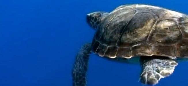 delfinek az adriÁn: a  tenger az otthonuk, az emberek csak vendégek a vízben DELFINEK AZ ADRIÁN: A  tenger az otthonuk, az emberek csak vendégek a vízben teknos morska kornjaca