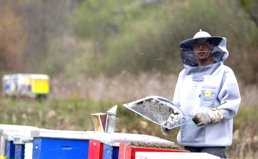 MEGVÁLTÁS: A méhméreggel állítólag leküzdhető a mellrák, Horvátországban fejik is a méheket gőzerővel