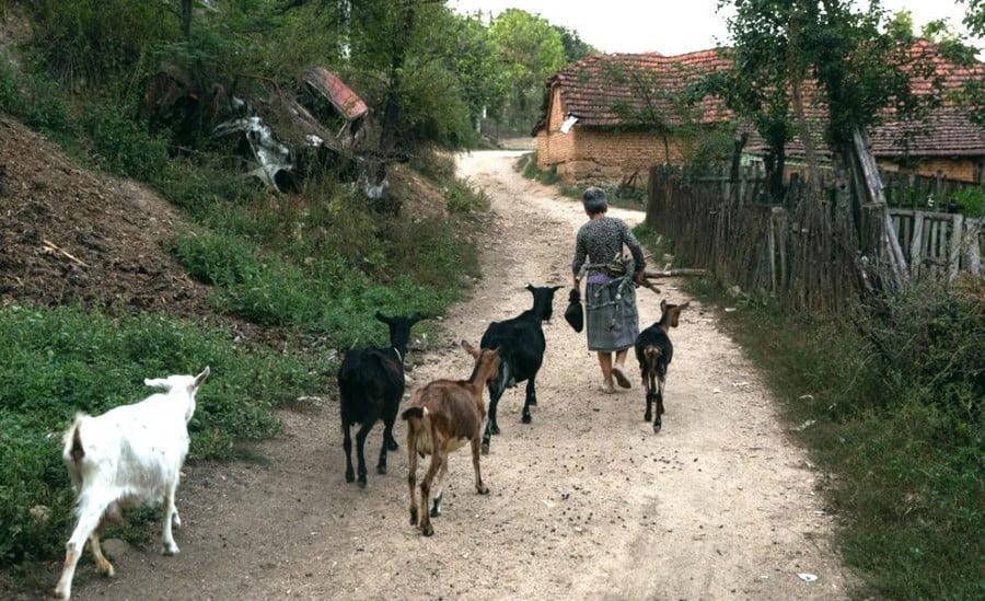 Juodkalnija MONTENEGRO IR SERBIJA: Dviejų religijų susidūrimas Cetinje, bet kodėl? brolių ožkų
