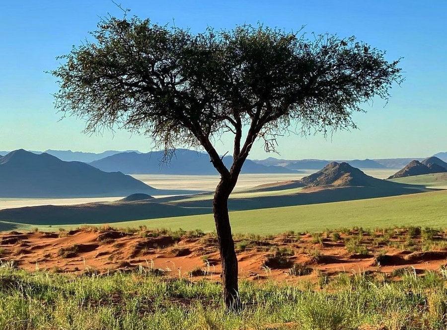 mutáns DÉL-AFRIKAI MUTÁNS: Az oltás ellenére megbetegedett egy szlovén orvos namibia