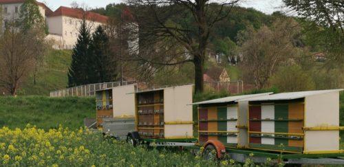 KAPTÁR: Szlovéniában a méhek csillapítják a stresszt, csípésük viszont egyelőre nem helyettesíti a vakcinát kaptarak 500x243