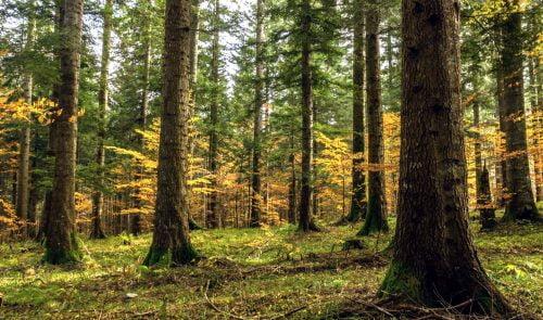 Velebit, erdő akna ÉLETVESZÉLY: Aknát szedtek, de még mindig maradt valabit erdo 500x295